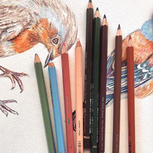 108: The World of Birds