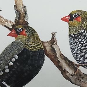 510: Watercolour Bird Workshop
